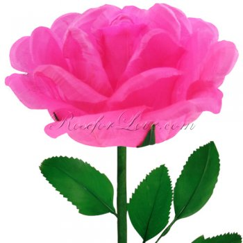 24 Blooming Pink Feather Roses