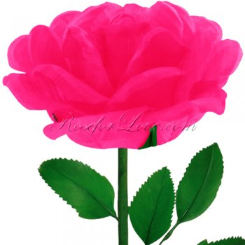 24 Blooming Bright Pink Feather Roses