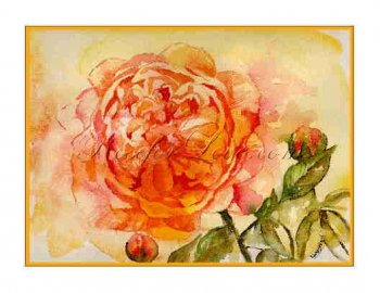 8 Watercolor English Rose Greeting Note Cards